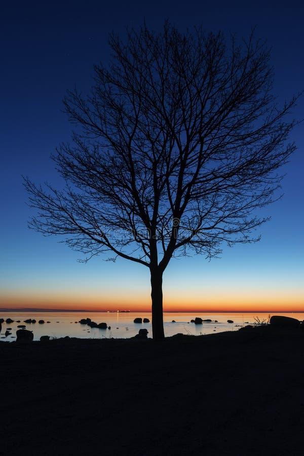 Σκιαγραφία δέντρων τή νύχτα στοκ εικόνες με δικαίωμα ελεύθερης χρήσης