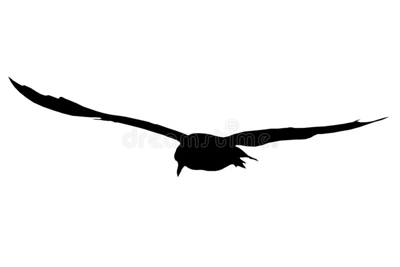 σκιαγραφία γλάρων στοκ εικόνες με δικαίωμα ελεύθερης χρήσης