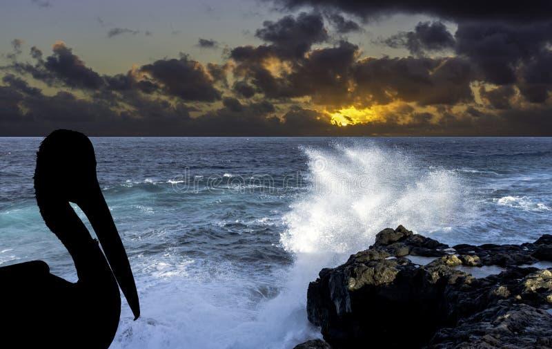 Σκιαγραφία ενός άγριου πελεκάνου με τη δραματική ανατολή πέρα από τον ωκεανό - Los Cocoteros, Lanzarote στοκ εικόνα