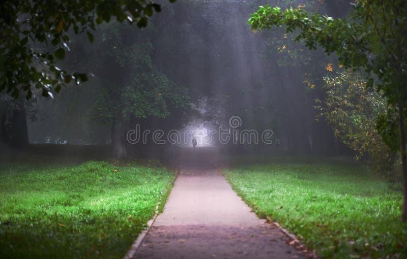 Σκιαγραφία ενός ατόμου στο πάρκο στην ομίχλη στοκ εικόνες