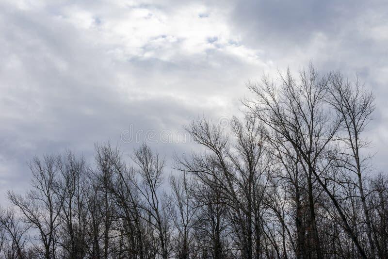 Σκιαγραφία ενός δέντρου ενάντια σε έναν ουρανό στοκ φωτογραφία με δικαίωμα ελεύθερης χρήσης