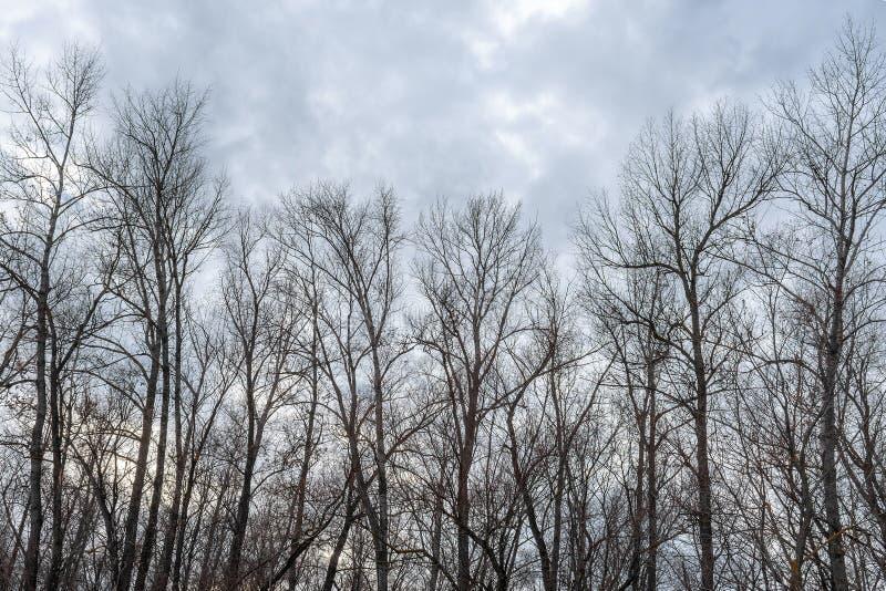 Σκιαγραφία ενός δέντρου ενάντια σε έναν ουρανό στοκ εικόνες με δικαίωμα ελεύθερης χρήσης