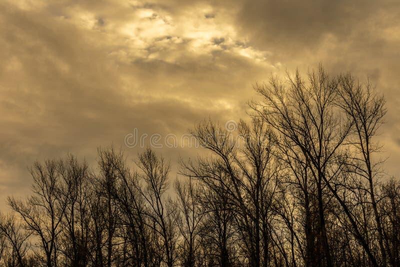 Σκιαγραφία ενός δέντρου ενάντια σε έναν ουρανό στοκ εικόνες