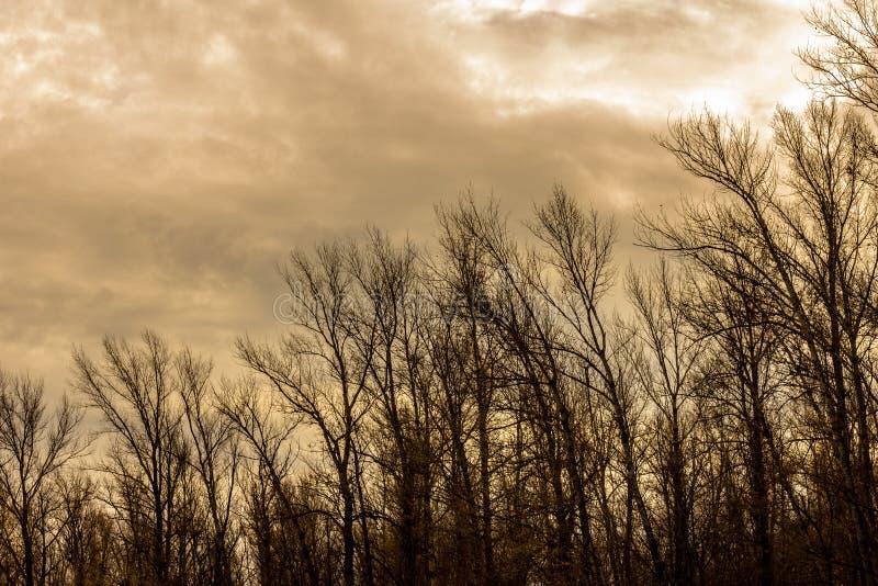 Σκιαγραφία ενός δέντρου ενάντια σε έναν ουρανό στοκ φωτογραφία