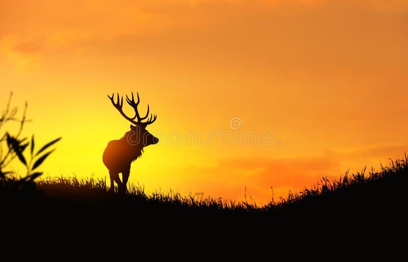 Σκιαγραφία ενός ελαφιού στοκ φωτογραφίες με δικαίωμα ελεύθερης χρήσης
