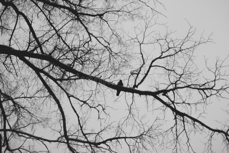 Σκιαγραφία ενός πουλιού σε έναν κλάδο δέντρων στοκ εικόνες