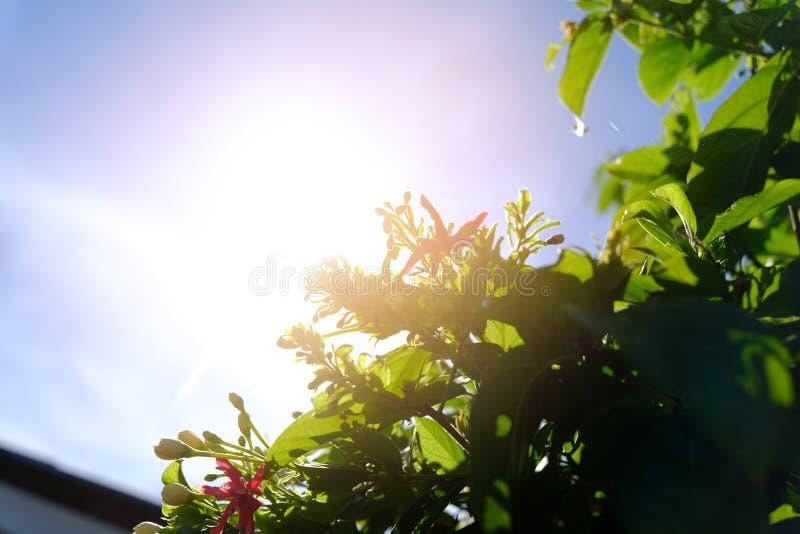 Σκιαγραφία και ηλιοβασίλεμα δέντρων λουλουδιών στοκ φωτογραφίες