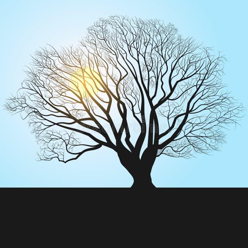σκιαγραφία και μεσημέρι δέντρων ελεύθερη απεικόνιση δικαιώματος