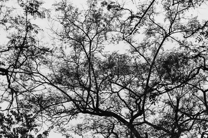 Σκιαγραφία κλάδων δέντρων στη Βαρκελώνη στοκ εικόνες
