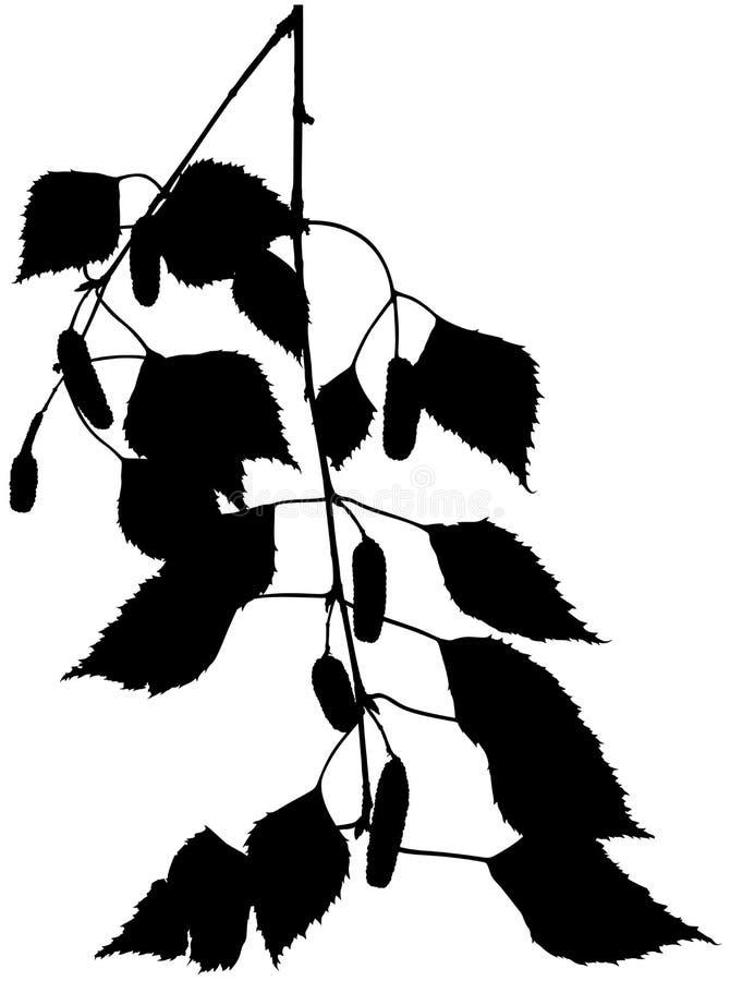 σκιαγραφία κλάδων σημύδων απεικόνιση αποθεμάτων