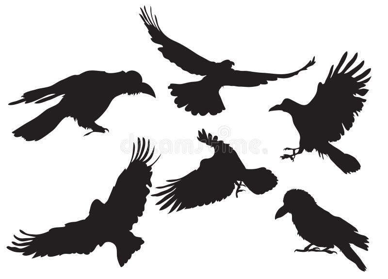 Download Σκιαγραφία κοράκων διανυσματική απεικόνιση. εικονογραφία από ράμφη - 13179386