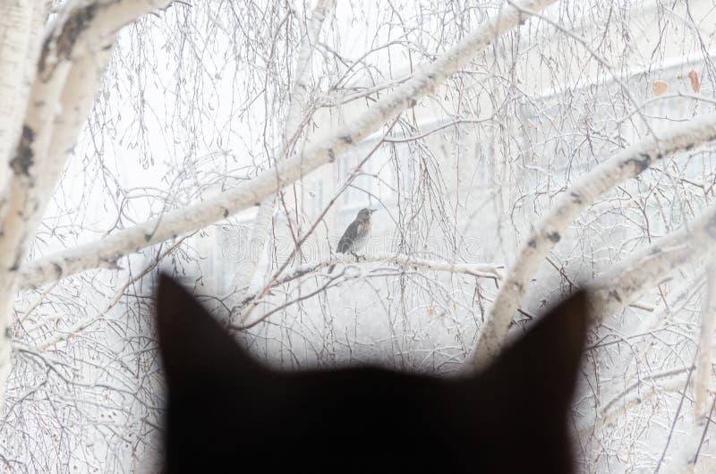 Σκιαγραφία μιας μαύρης γάτας που προσέχει το πουλί μέσω του παραθύρου στοκ φωτογραφίες