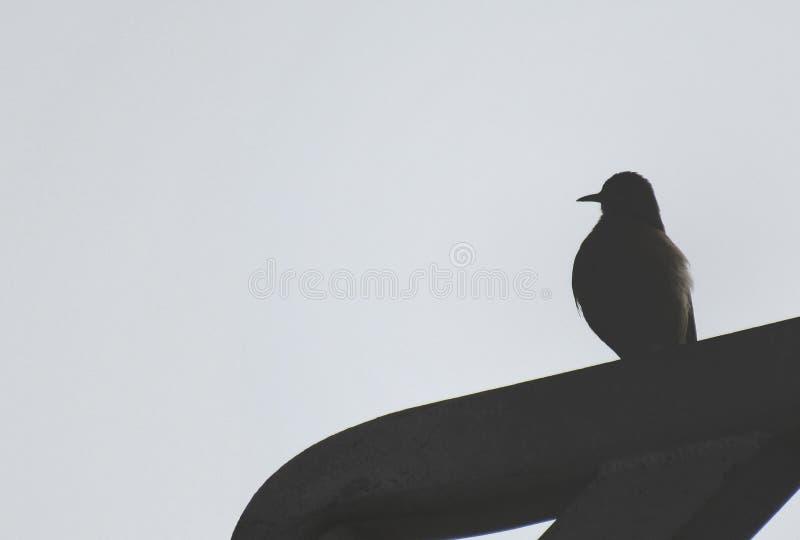 Σκιαγραφία πουλιών στον γκρίζο ουρανό στοκ εικόνα