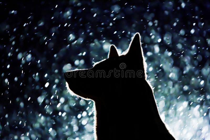 Σκιαγραφία σκυλιών στους προβολείς στοκ εικόνες