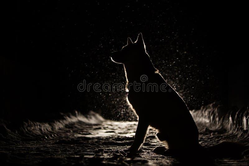 Σκιαγραφία σκυλιών στους προβολείς στοκ εικόνα