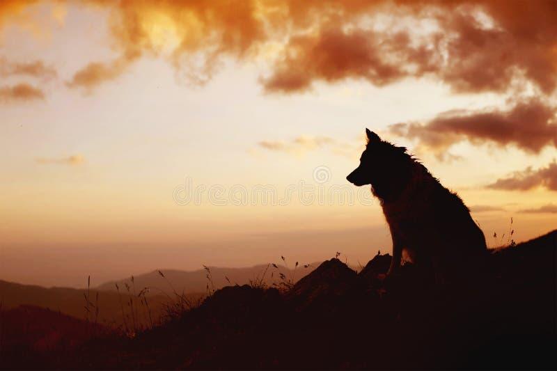 Σκιαγραφία της συνεδρίασης σκυλιών πέρα από τους λόφους Πορτρέτο του κόλλεϊ συνόρων στοκ φωτογραφία με δικαίωμα ελεύθερης χρήσης