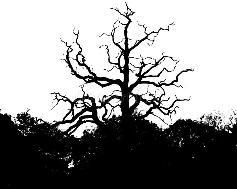 Σκιαγραφία του δέντρου στο πάρκο στοκ εικόνες με δικαίωμα ελεύθερης χρήσης