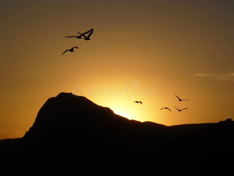 Σκιαγραφία του βουνού και των γλάρων στο ηλιοβασίλεμα Ð ¡ ил ÑƒÑ  Ñ 'Ð ³ Ð ¾ Ñ€Ñ ‹Ð¸ Ñ ‡ аÐΜк Ð ½ а Ð·Ð°ÐºÐ°Ñ 'е στοκ φωτογραφία
