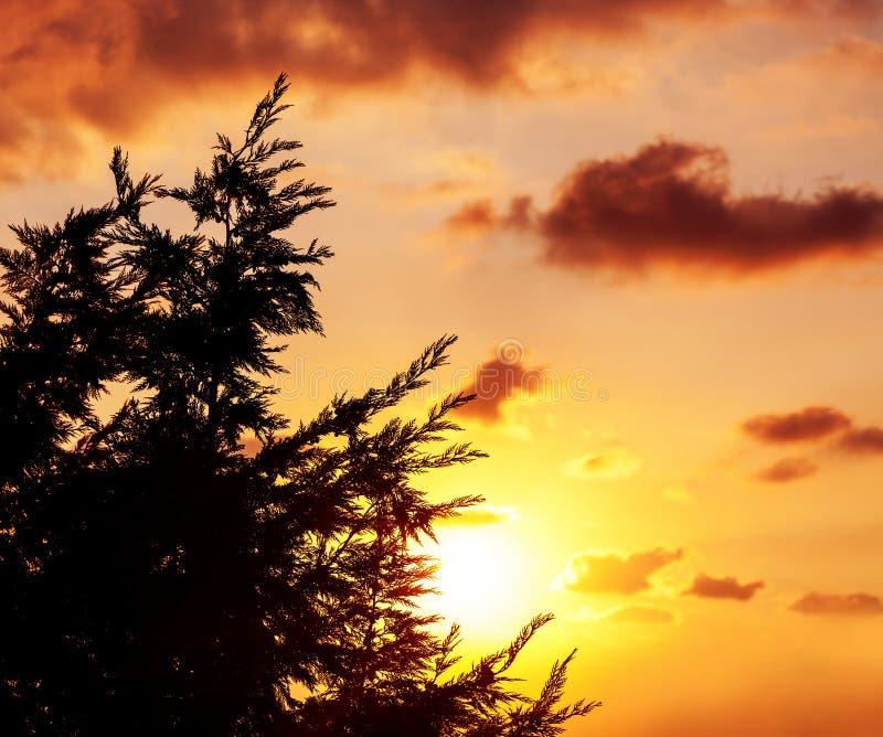 Σκιαγραφία του δέντρου πέρα από το ηλιοβασίλεμα στοκ φωτογραφίες με δικαίωμα ελεύθερης χρήσης