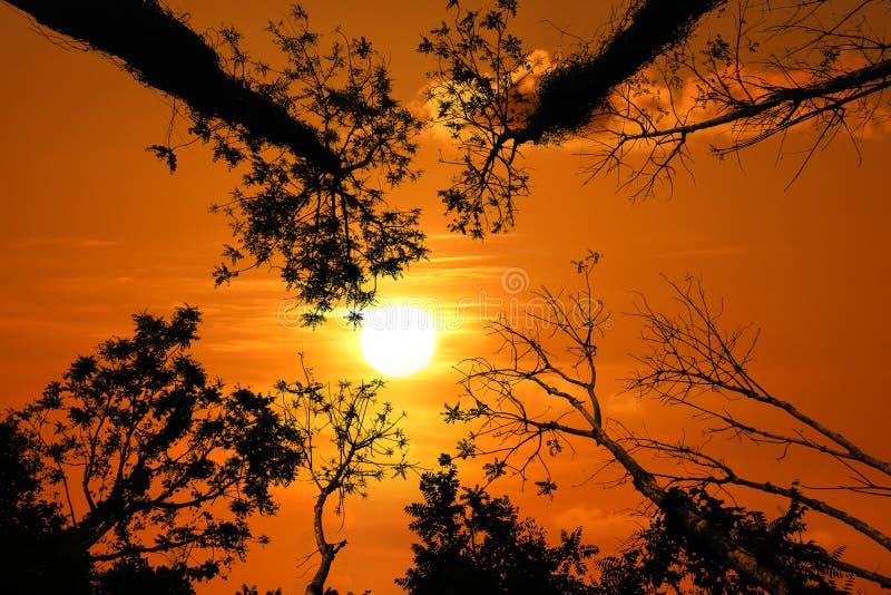 Σκιαγραφία του θόλου δέντρων με το κόκκινο ηλιοβασίλεμα ουρανού απεικόνιση αποθεμάτων