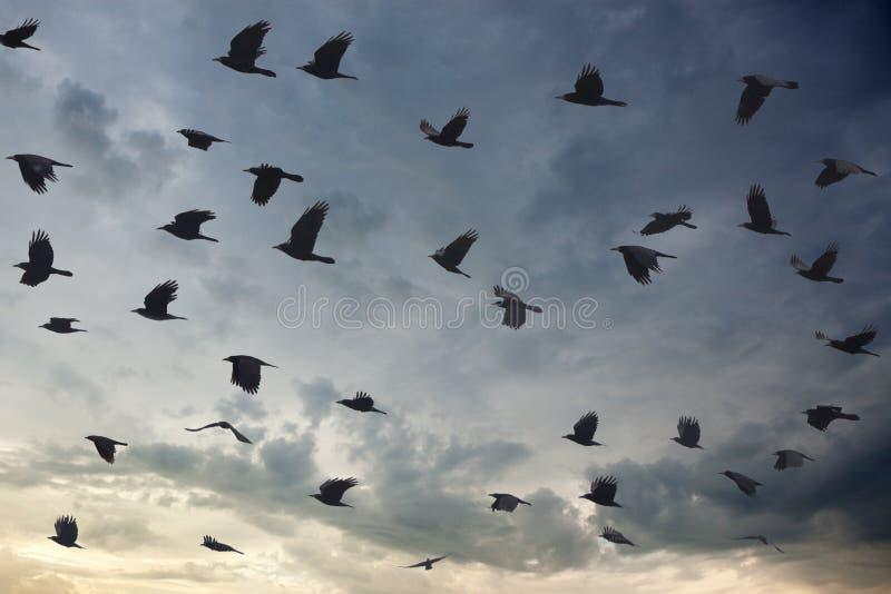 Σκιαγραφία του κοπαδιού πουλιών που καλύπτει τον ουρανό στο σούρουπο στοκ εικόνες με δικαίωμα ελεύθερης χρήσης