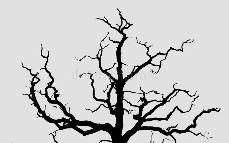 Σκιαγραφία του ξηρού δέντρου στο πάρκο του άσπρου υποβάθρου στοκ φωτογραφίες