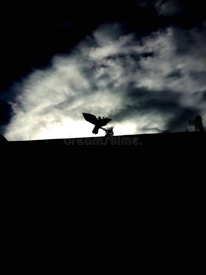 Σκιαγραφία του πουλιού στοκ εικόνα