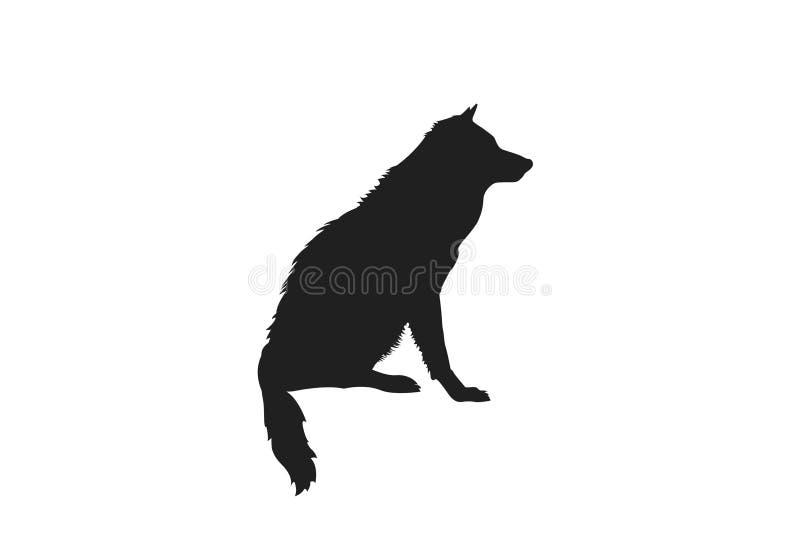 Σκιαγραφία του πραγματικού λύκου συνεδρίασης κοιτάγματος Ο Μαύρος στην άσπρη ανασκόπηση ελεύθερη απεικόνιση δικαιώματος