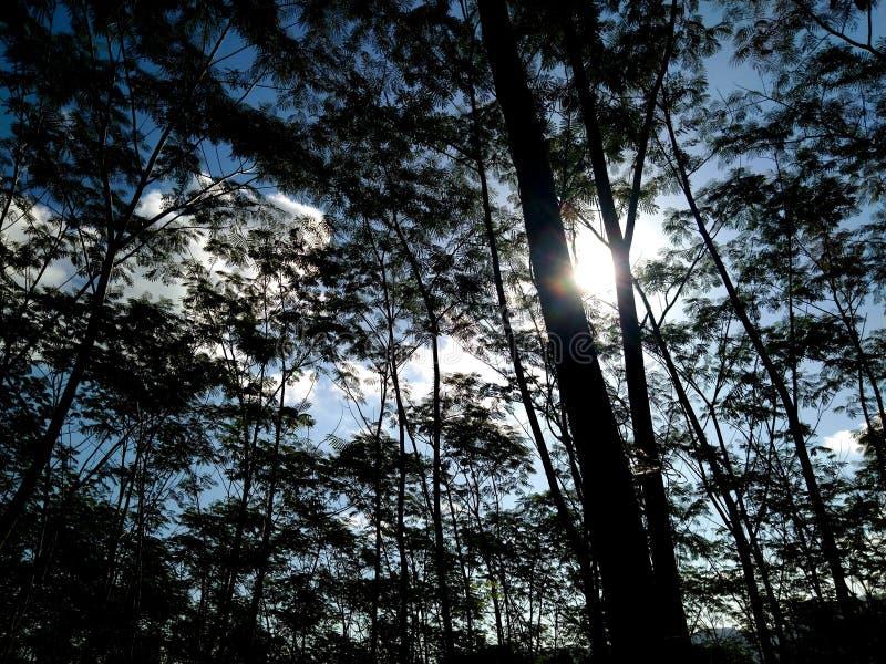 Σκιαγραφία του τροπικού δάσους στοκ εικόνες