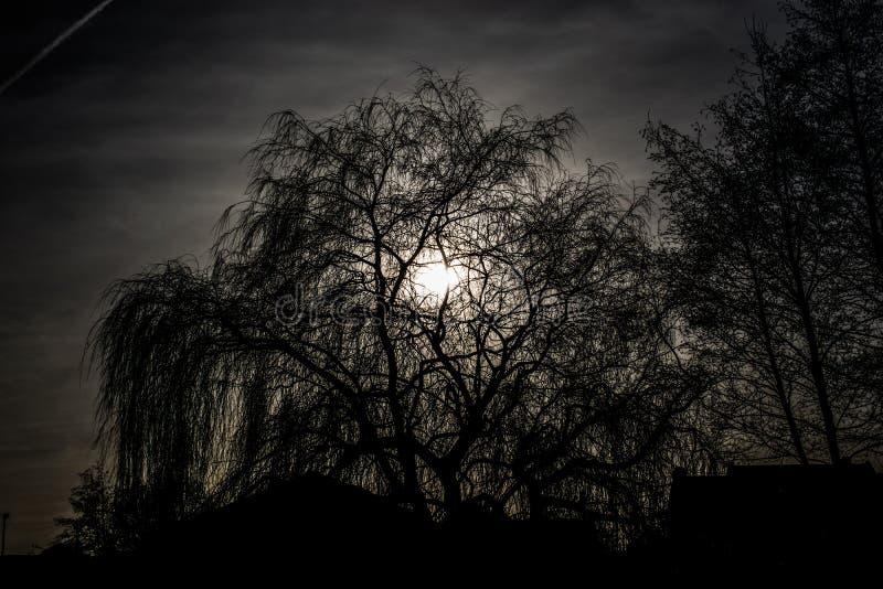 Σκιαγραφία του ψηλού δέντρου στοκ εικόνα με δικαίωμα ελεύθερης χρήσης