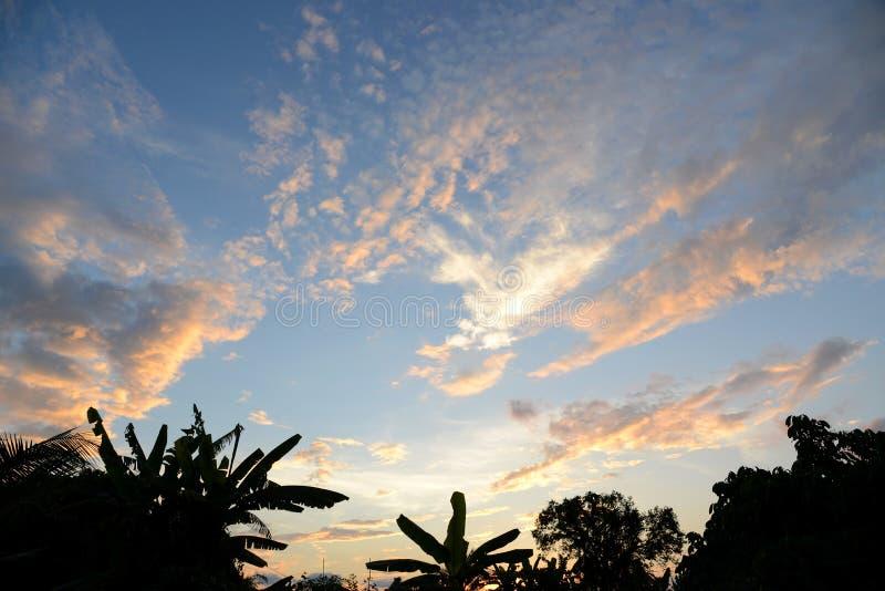 Σκιαγραφία των δέντρων στο μπλε ουρανό με τα άσπρα και πορτοκαλιά σύννεφα στοκ εικόνα