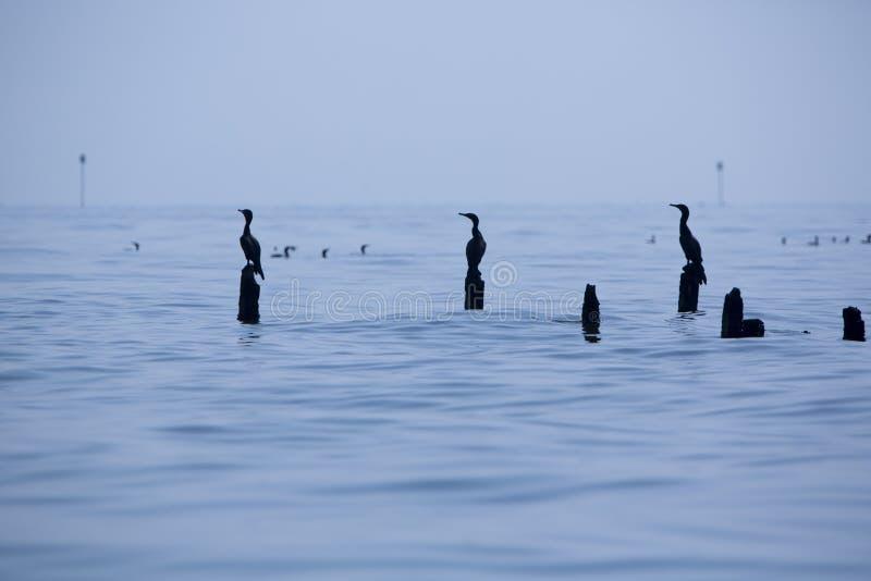 Σκιαγραφία των πουλιών που σκαρφαλώνει στους συγκεκριμένους στυλοβάτες, λίμνη Μαρακαΐμπο στοκ φωτογραφίες με δικαίωμα ελεύθερης χρήσης