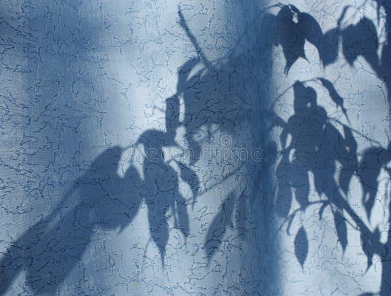 σκιαγραφία των φύλλων και των κλάδων σε μια μπλε κουρτίνα, κουρτίνες ή Tulle στο υπόβαθρο του ήλιου στοκ φωτογραφία