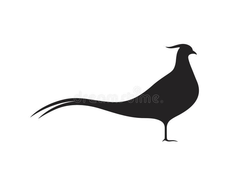 Σκιαγραφία φασιανών Απομονωμένος φασιανός στο άσπρο υπόβαθρο Πουλί απεικόνιση αποθεμάτων