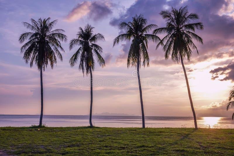 Σκιαγραφία φοινίκων στο πορφυρό υπόβαθρο ηλιοβασιλέματος, νησί Samui στην Ταϊλάνδη στοκ φωτογραφίες με δικαίωμα ελεύθερης χρήσης