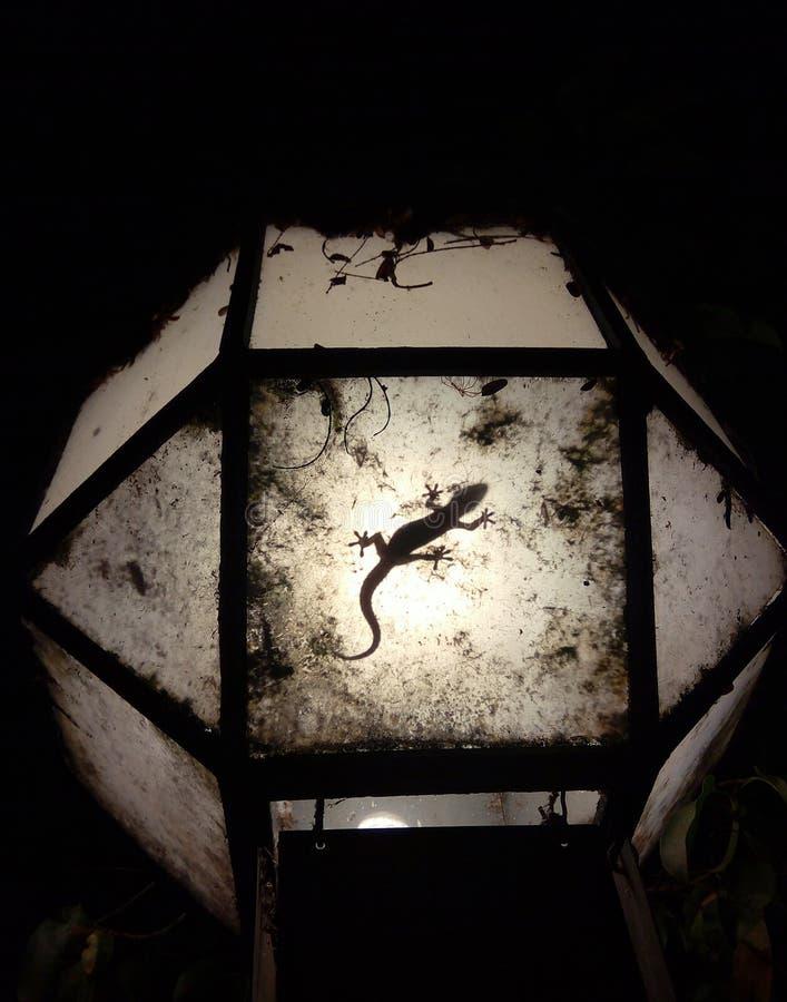 Σκιαγραφία gecko νύχτας στο λαμπτήρα στοκ εικόνες με δικαίωμα ελεύθερης χρήσης