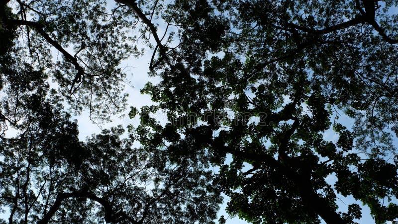 Σκιαγραφίες δέντρων με το μπλε ουρανό στοκ εικόνα με δικαίωμα ελεύθερης χρήσης