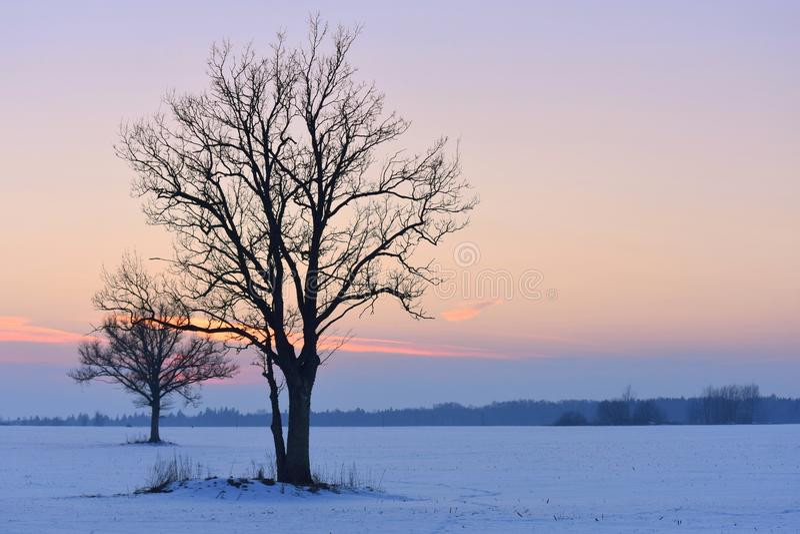 Σκιαγραφίες δέντρων επάνω από το φωτεινό χειμώνα ανώτατων δέντρων ηλιοβασιλέματος ήλιων γουνών κόκκινο στοκ εικόνες με δικαίωμα ελεύθερης χρήσης