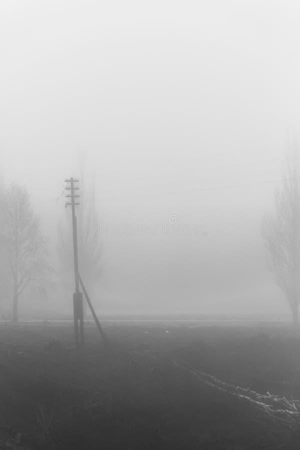 Σκιαγραφίες ενός δέντρου και lamppost στην ομίχλη στοκ εικόνες