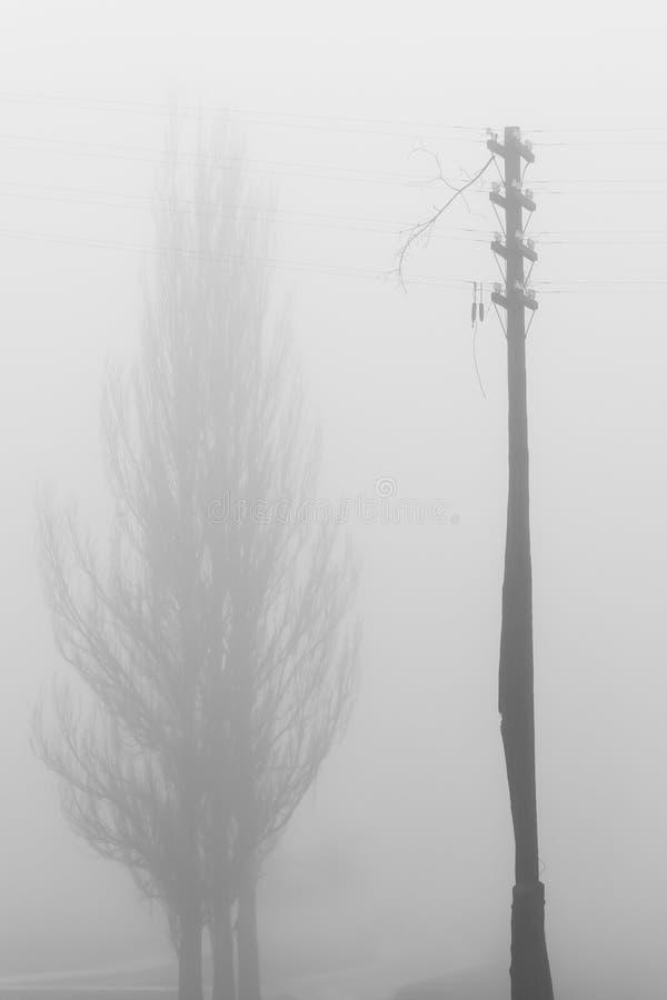 Σκιαγραφίες ενός δέντρου και lamppost στην ομίχλη στοκ εικόνες με δικαίωμα ελεύθερης χρήσης
