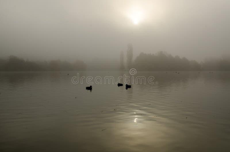 Σκιαγραφίες πουλιών σε μια ήρεμη λίμνη στο misty φως το πρωί στοκ φωτογραφία με δικαίωμα ελεύθερης χρήσης