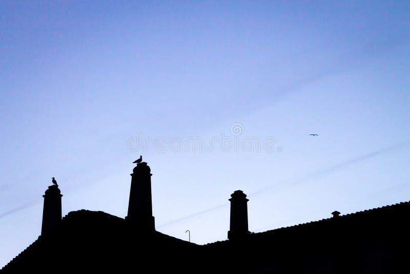 Σκιαγραφίες στεγών και Seagulls στοκ εικόνες με δικαίωμα ελεύθερης χρήσης