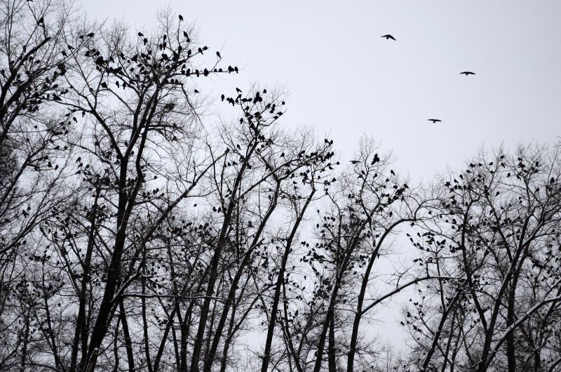 Σκιαγραφίες των κοράκων που κάθονται στα δέντρα στοκ φωτογραφία