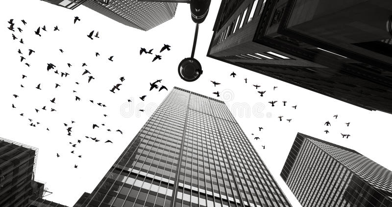 Σκιαγραφίες των περιστεριών μεταξύ των ουρανοξυστών του Μανχάταν στοκ εικόνα με δικαίωμα ελεύθερης χρήσης