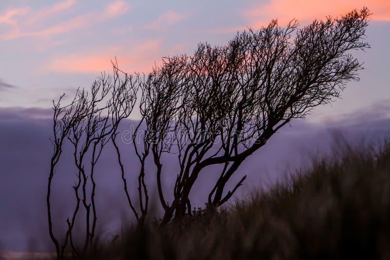 Σκιαγραφίες των threes στο υπόβαθρο ουρανού ηλιοβασιλέματος, στοκ φωτογραφίες