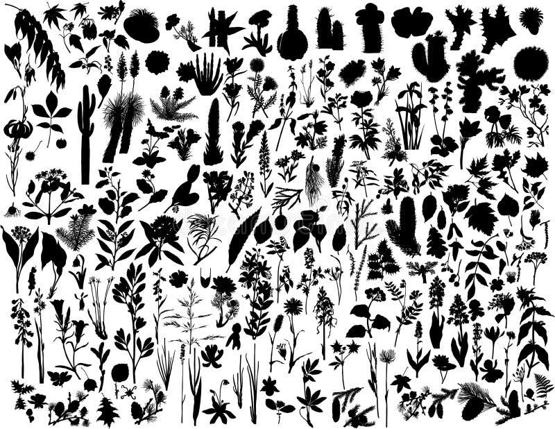 σκιαγραφίες φυτών απεικόνιση αποθεμάτων