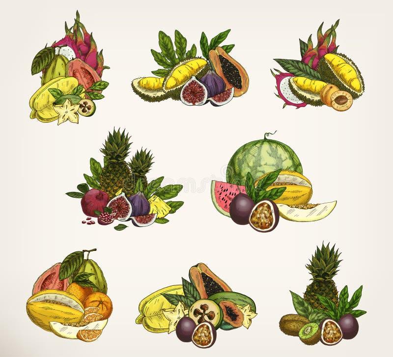 Σκιαγραφημένα εξωτικά και τροπικά φρούτα ελεύθερη απεικόνιση δικαιώματος