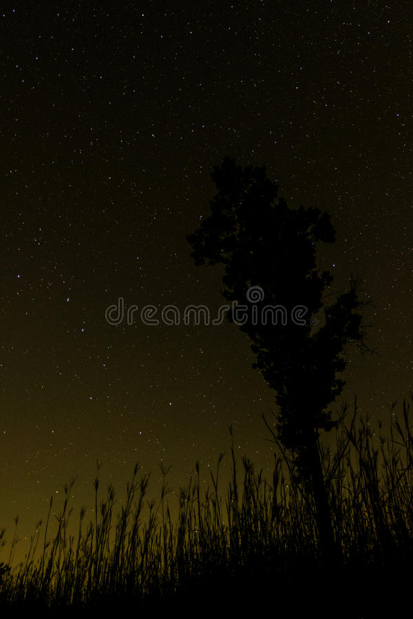 Σκιαγραφημένες δέντρο και χλόες ενάντια στον έναστρο ουρανό στοκ φωτογραφία με δικαίωμα ελεύθερης χρήσης