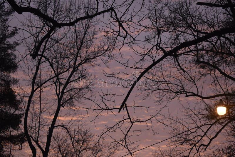Κλάδοι δέντρων στο σούρουπο στοκ φωτογραφίες με δικαίωμα ελεύθερης χρήσης