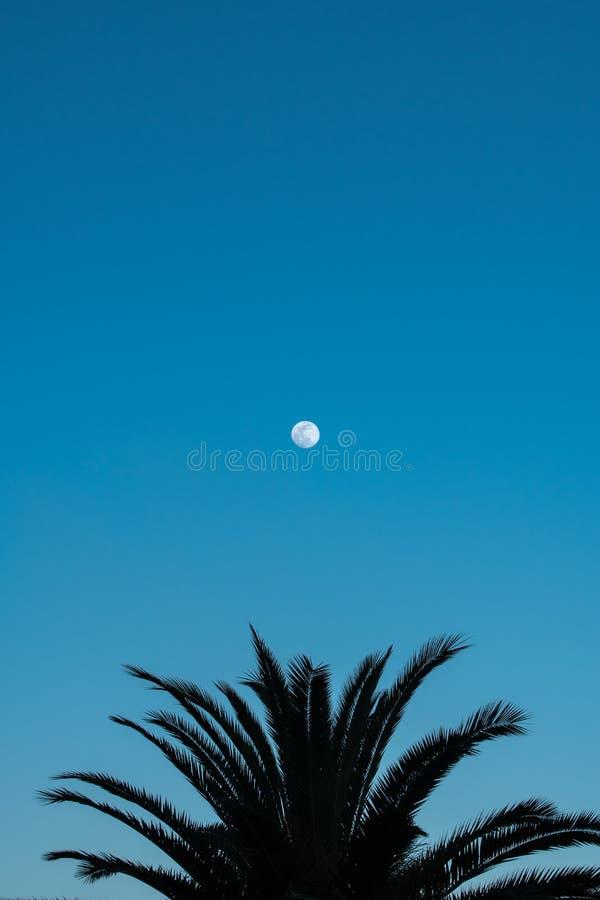 Σκιαγραφημένοι φοίνικας και πανσέληνος στο μπλε ουρανό στοκ εικόνες